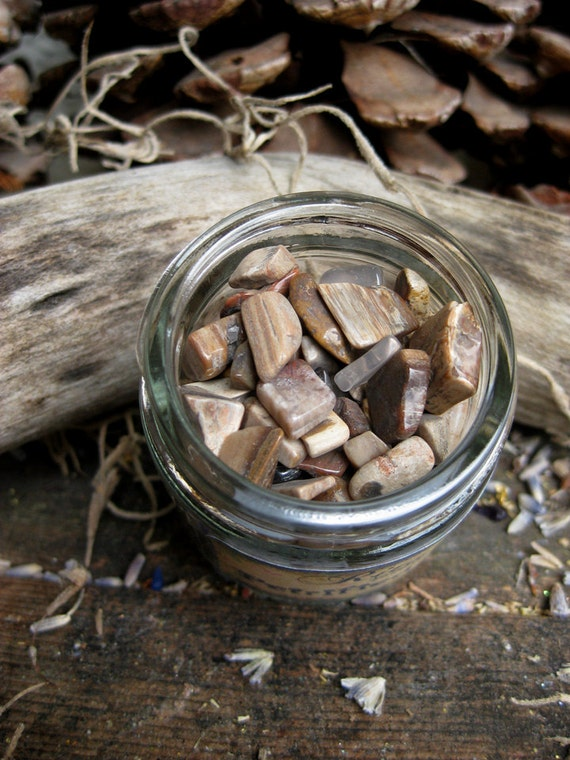Rita's Petrified Wood Chips - Intuitive Growth, Grounding, Stabalize Emotions, Strength, Recall Past Lives