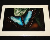 PIF - Blue Morpho Butterfly Photo Card