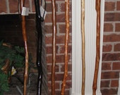 Crooked Man's Solid Tulip Poplar Walking Sticks 49, 47 and 46 Inches