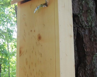 Bat House BATchelor Pad