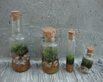Mini Moss Terrarium - Set of 4 - Great Guest or Wedding Favors