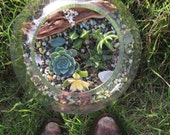 Lost in the Desert Succulent Terrarium Large Orb
