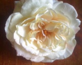 White or Ivory English Rose Hair Clip, Wedding, Bridal,  Wedding,
