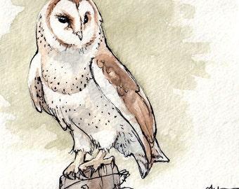 Barn Owl Watercolor Study 1 in Green - Fine Art Print