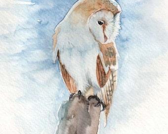 Frosty Barn Owl - Tyto Alba - Watercolor Print
