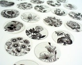 Stickers Envelope Seals Flowers Black and White Drawings 1 inch stickers - set of 24