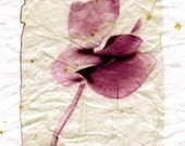 Original Polaroid Emulsion Lift of a Flower - signed