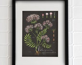 Valerian print 8.5x11 - Botanical collection - flower plant herbs
