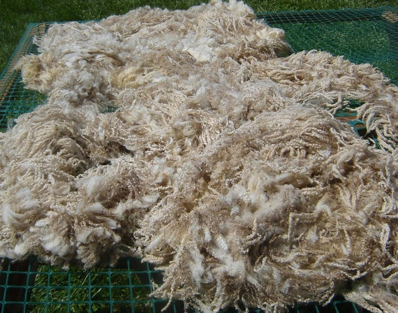 BFL Raw Fleece