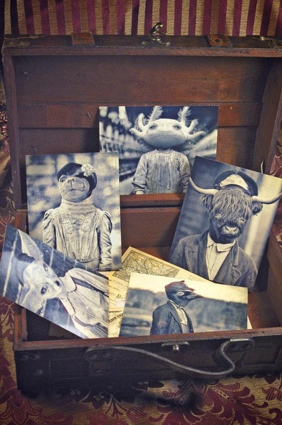 Set of 5 original Postcards - Mini Print Set N2 - animals portrait  anthropomorphic axolotl  seal raven  bull fox art doll old