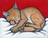 Willy Kitten.  8 x 10 print