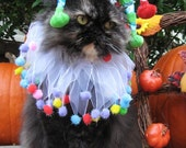 Pet Jester costume