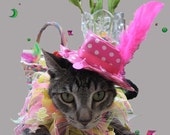 Party Hat - In the Pink cat hat and All Hopped Up collar