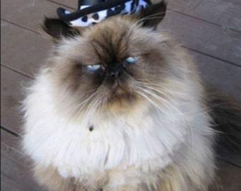 Hollywood Hustler Cat Hat