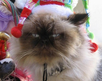 Jolly Jester costume hat (hat only . . .no collar)  for cats and dogs