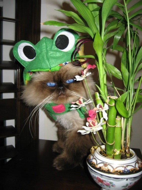 Infrognito Pet Frog Hat