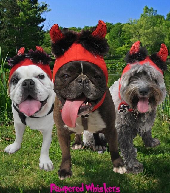 Little Devil costume for dog or cat