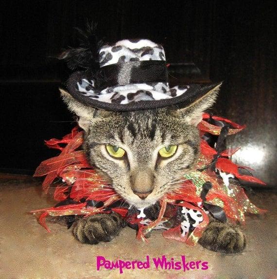 Hollywood Hustler cat hat and Rockin Hot Rebel party collar