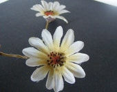 Baby DAISIES - pair of small white daisy pins - customizable on bobby pin, barrette, comb or alligator clip