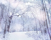 Winter Nature Photography, Snow White Frozen Dreamy Forest, Woodland Photograph White Nature Decor Wall Art Winter Wonderland Ice Cold