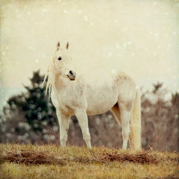 https://www.etsy.com/listing/88232779/winter-fairytale-horse-photography?ref=shop_home_active