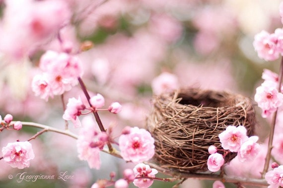 Nature Photography - Spring Plum Blossoms with Bird Nest, Romantic Pink Wall Decor