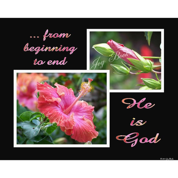 BEGINNING TO END --- 8 X 10 Photograph & Scripture Art Print (Rose Pink Hibiscus and Bud On Black Background)