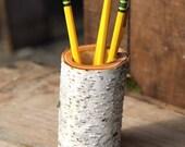 Rustic Birch Log Pencil Holder