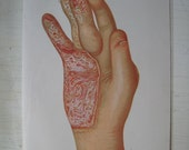 Antique Anatomy Color Plate 1896 Set of 2