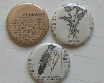 Alabama State Flower and Bird Vintage Dictionary Illustration Magnet Set of 3