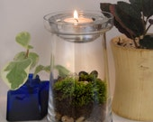 Tea Light Moss Terrarium Kit DIY