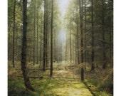 Thetford Forest 5 - 8x10 Polaroid Print