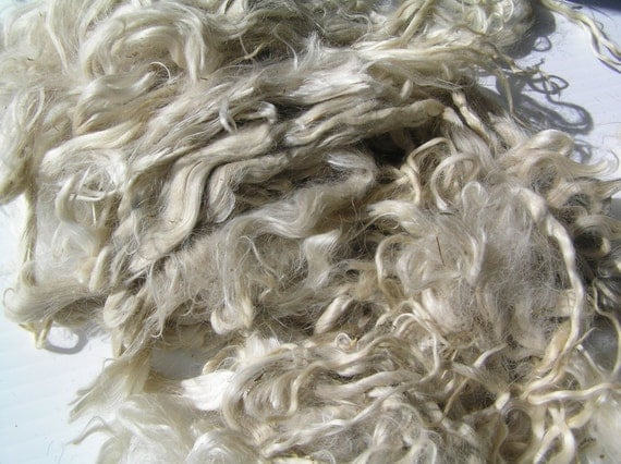 Reserve Alpaca unwashed, White, and brown  locks, Doll Hair