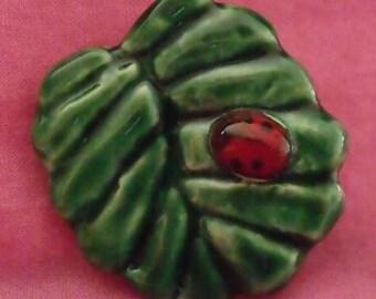 Round leaf and bug