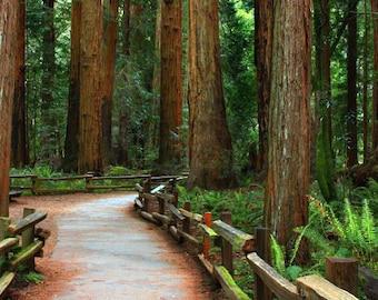 Photo wall decal panorama, Muir Woods, California- 24x50