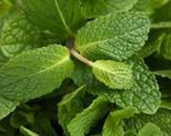 1 oz Spearmint Essential oil