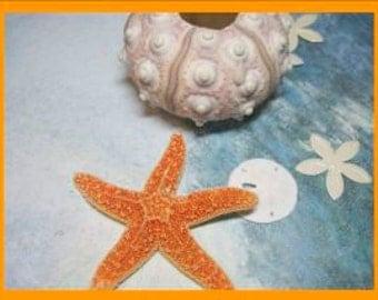 Single Sugar Starfish Boutonniere Stick Pins