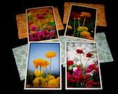 Ranunculus Flower Blank Card Assortment -- Set of 4 Cards and Envelopes