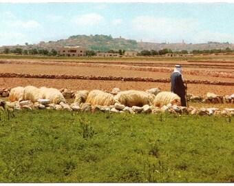 Vintage Postcard, The Shepherds Field, Bethlehem, Israel