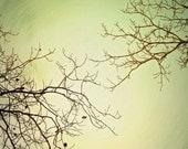 Tree Photography - Nature Photography Print - Green Sky - Come Together 8x10