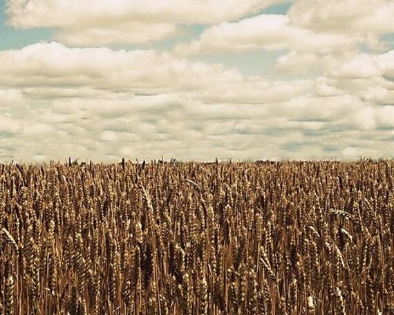 Summers Harvest 8x10 Fine Art Photography Print