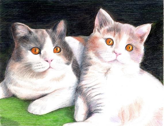 Custom Kitten Pet Portrait Prismacolor Pencil