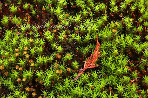 Fine Art Photograph - Ground Cover in the Fall