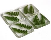 Fern Leaf Magnets - Square Resin Magnets - Set of 4 in a Tin