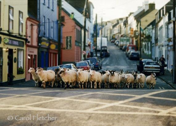 Dingle Sheep - Ireland - Art Photography Print - sheep in the road - flock - herd - irish - éire - gaeltacht - gaelic - houses - street