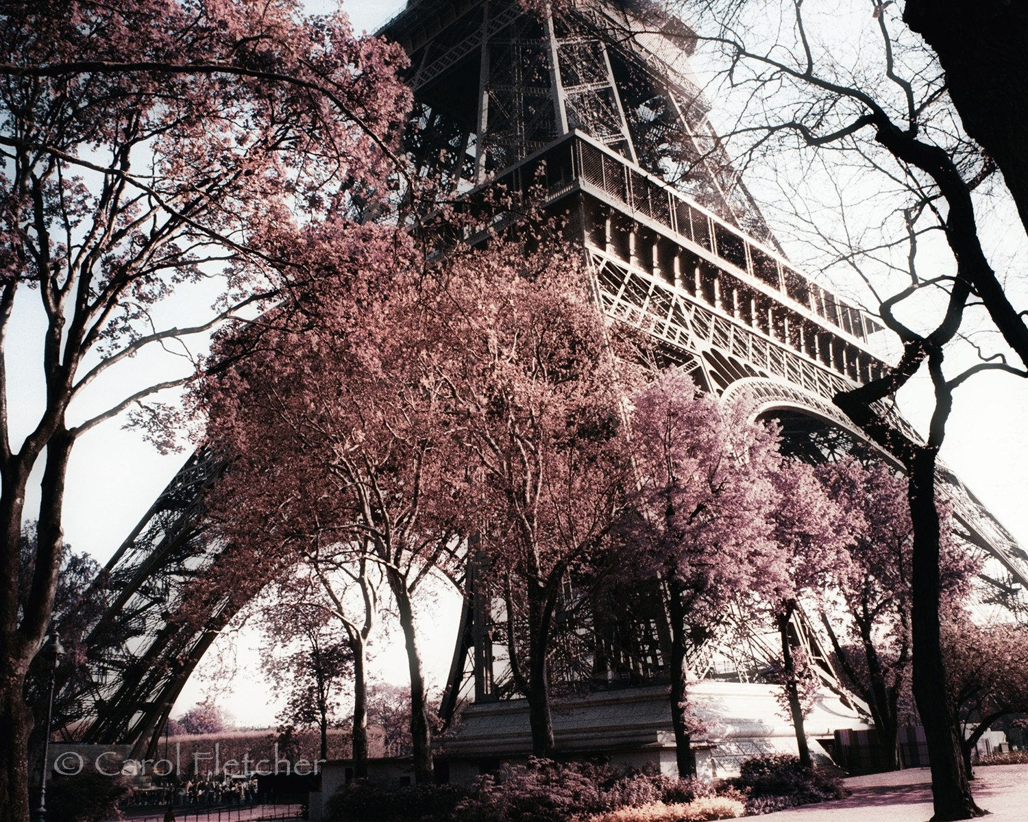 Paris in the Spring by Carol Fletcher