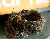Natural rustic birds nest made of old cedar by a little birdie
