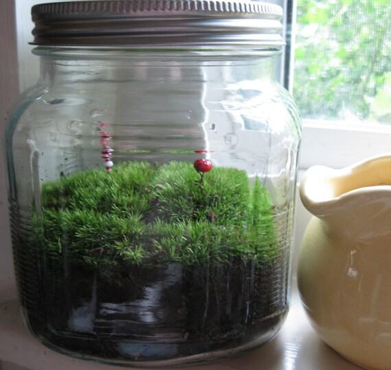 cradle of civilization garden \/ live moss terrarium living green plant ecosystem upcycled glass jar