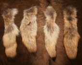Reserved Listing: Lot of 4 Real Coyote Tails - Organic Preserved Taxidermy Specimens