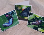 Butterfly Photo Print Blank Notecard Buyers Choice